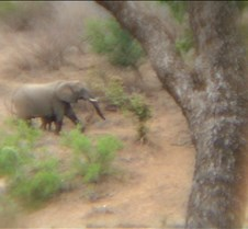 Ivory Lodge & Safari Pictures0154