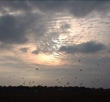 Bird Sunset 2