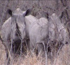 Ivory Lodge Safari Mupulanga0019