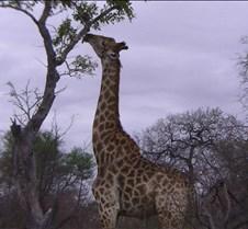 Ivory Lodge & Safari Pictures0126