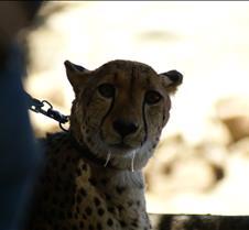 Wild Animal Park 03-09 017