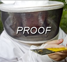 102612_beekeeper2