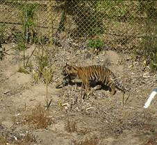 Wild Animal Park 03-09 093