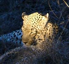 Ivory Lodge Safari Mupulanga0037