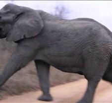 Ivory Lodge & Safari Pictures0053