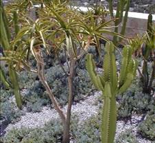 39_cactus_garden_1