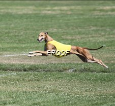 Specials_Run2_9923Cr