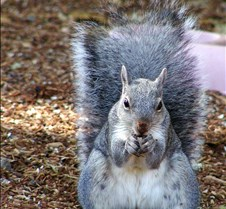 091203 Squirrel 80