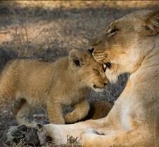 mother-cub