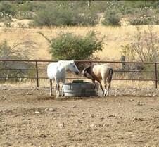 Tucson Lazy K horses 3