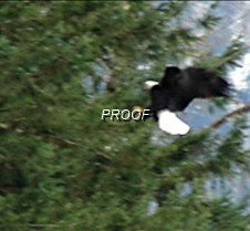 eagleflight-9