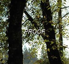 fine tree 3