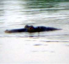 Sunset River Cruise Zambezi River0012