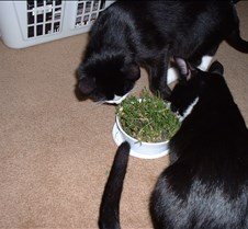 Cat Grass Fun 4