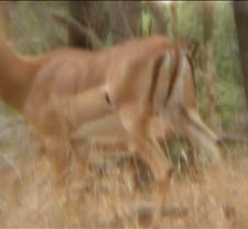 Ivory Lodge & Safari Pictures0158