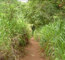 Trail to Kipu Falls