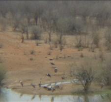 Safari Lodge Water Hole & Vulture Feedin