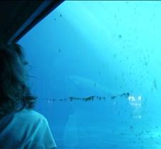 Miami Seaquarium 043