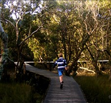 Board walk through mangroves