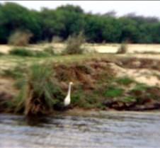 Sunset River Cruise Zambezi River0024