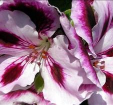 dkandltpinkflowers