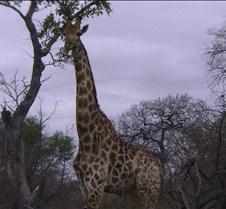 Ivory Lodge & Safari Pictures0125