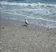 Beach Atlantic City11