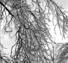 treeice