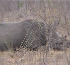 Ivory Lodge & Safari Pictures0113