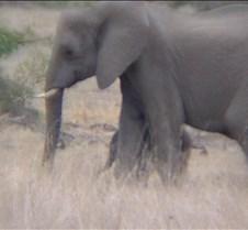 Ivory Lodge & Safari Pictures0109