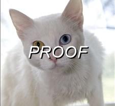 082013_Pet(Cat)