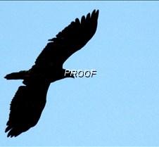 eagleflight-10