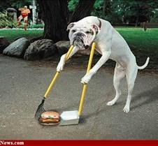 Dog_Burger