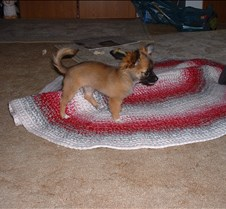 puppy picts 9-21-03 061