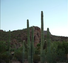 Tucson desert 1