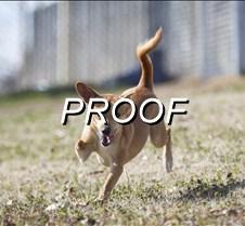 010813_dog