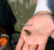 dragonfly larve