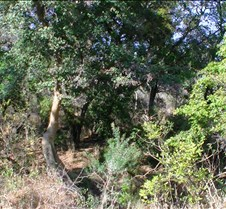 Ivory Lodge Safari Mupulanga0053