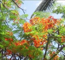 Hawaii 2010 211