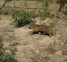 Wild Animal Park 03-09 095