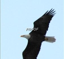 eaglesflight-4