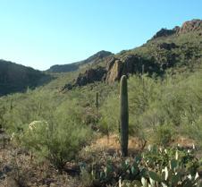Tucson desert 6