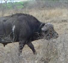 Ivory Lodge & Safari Pictures0094
