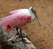 Tyler Zoo