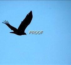 eagleflight-11