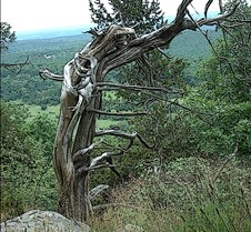 Mountain monster tree 2