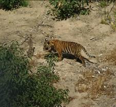 Wild Animal Park 03-09 101
