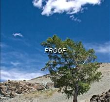 Tree_Sky