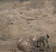 Ivory Lodge & Safari Pictures0025