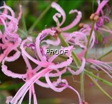 swirly pink2
